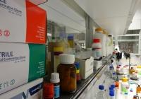 Lab, the lab