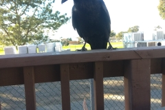 Birds in La Jolla
