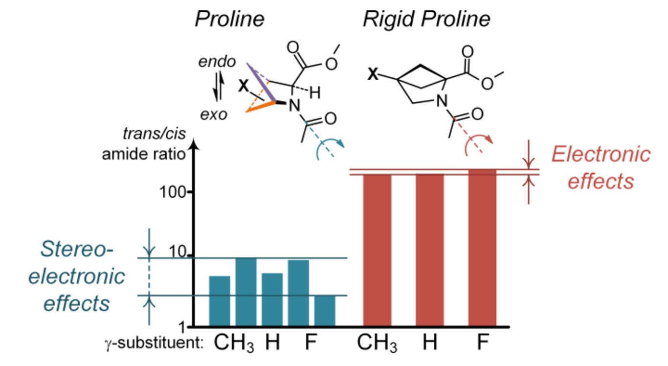 A peptidyl-prolyl model study: How does the electronic effect influence the amide bond conformation?